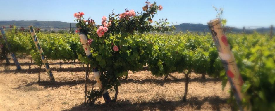 La vinya pintada en el Penedes